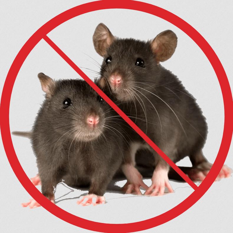 Уничтожение мышей с гарантией